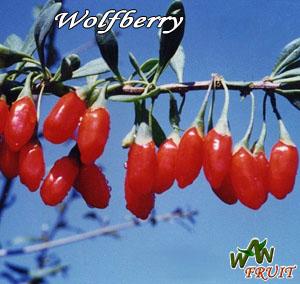 wolfberries