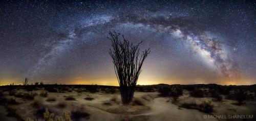 busch in der wüste sternenhimmel